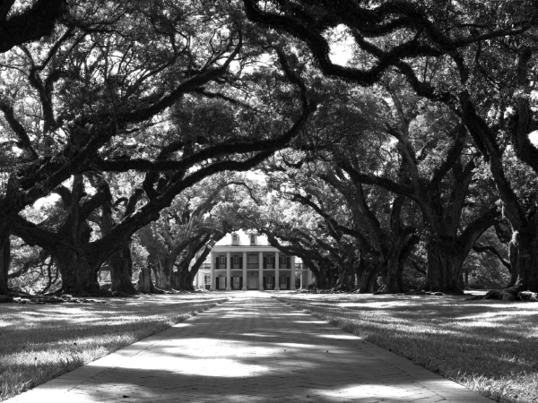 Trees of Oak Alley Plantation in Louisiana
